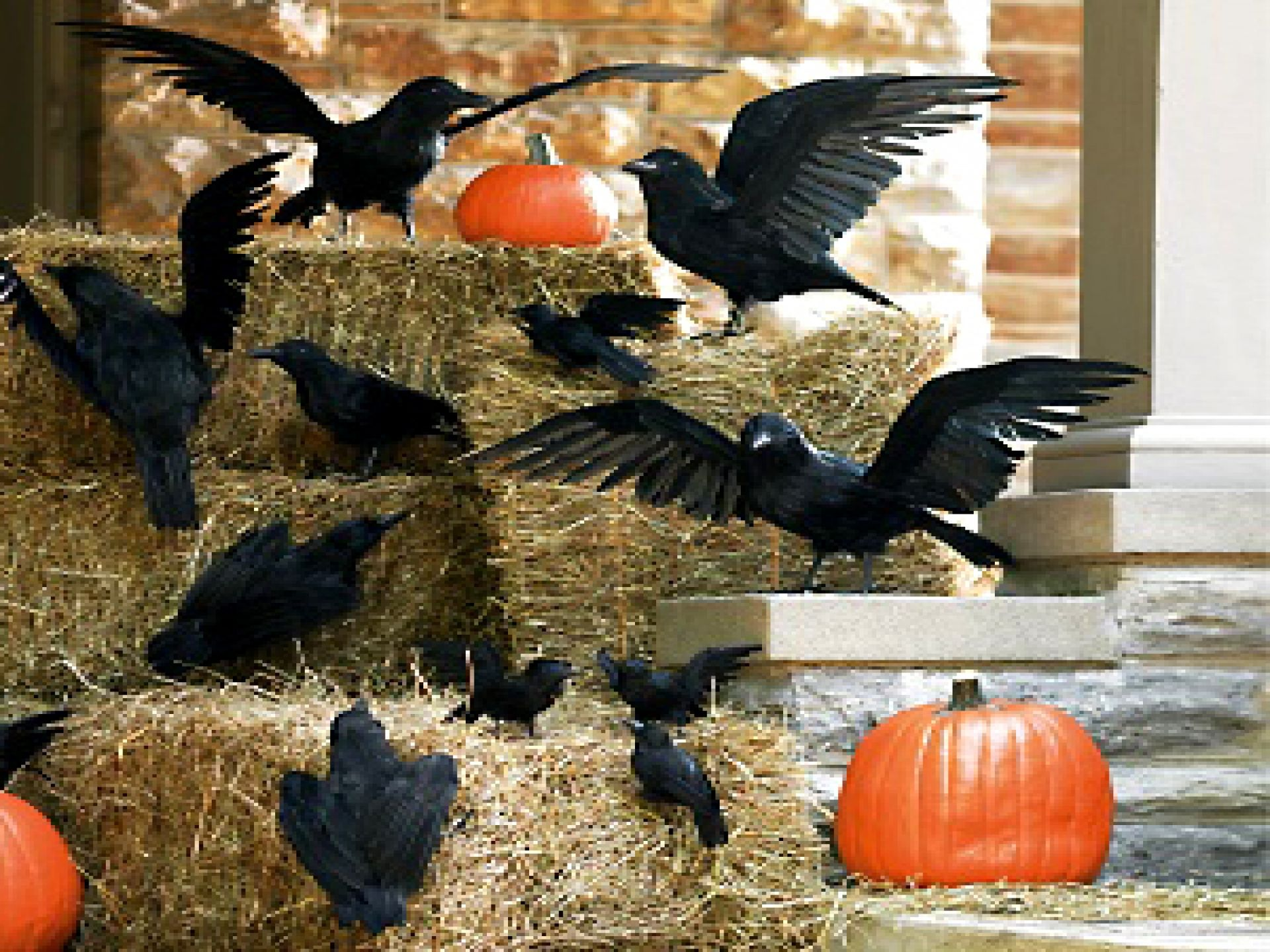 Homemade Outdoor Halloween Decorations Ideas This is a cool bird - Pinterest Halloween Decorations