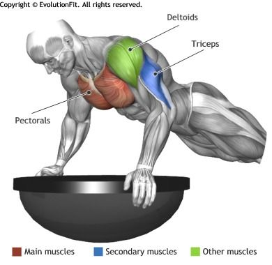 CHEST - PUSH UP ON BOSU   Abs   Pinterest   Ejercicios ...