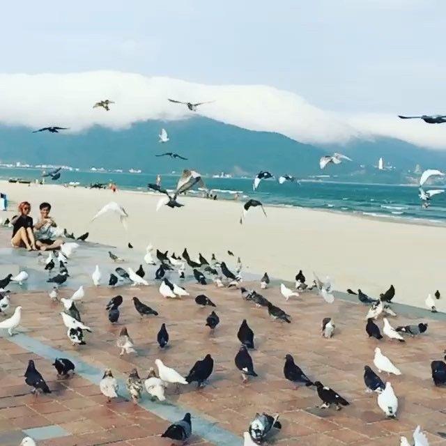 East Sea park in Da Nang city #danang #peace #beach # ...