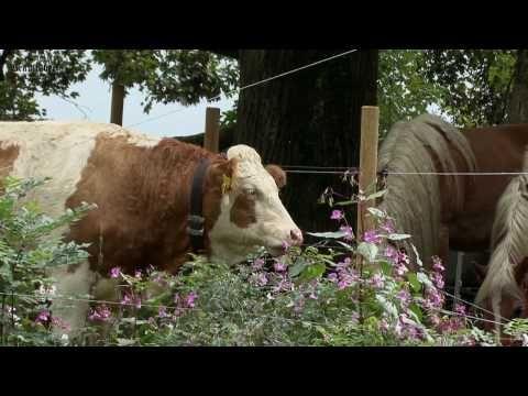 Bräustüberl Tegernsee und das Tegernseer Tal - YouTube