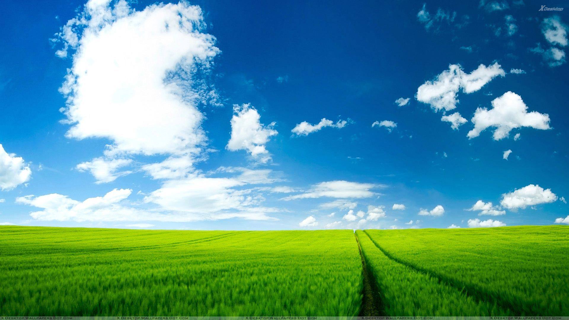 Cool Summer Green Fields Background Image