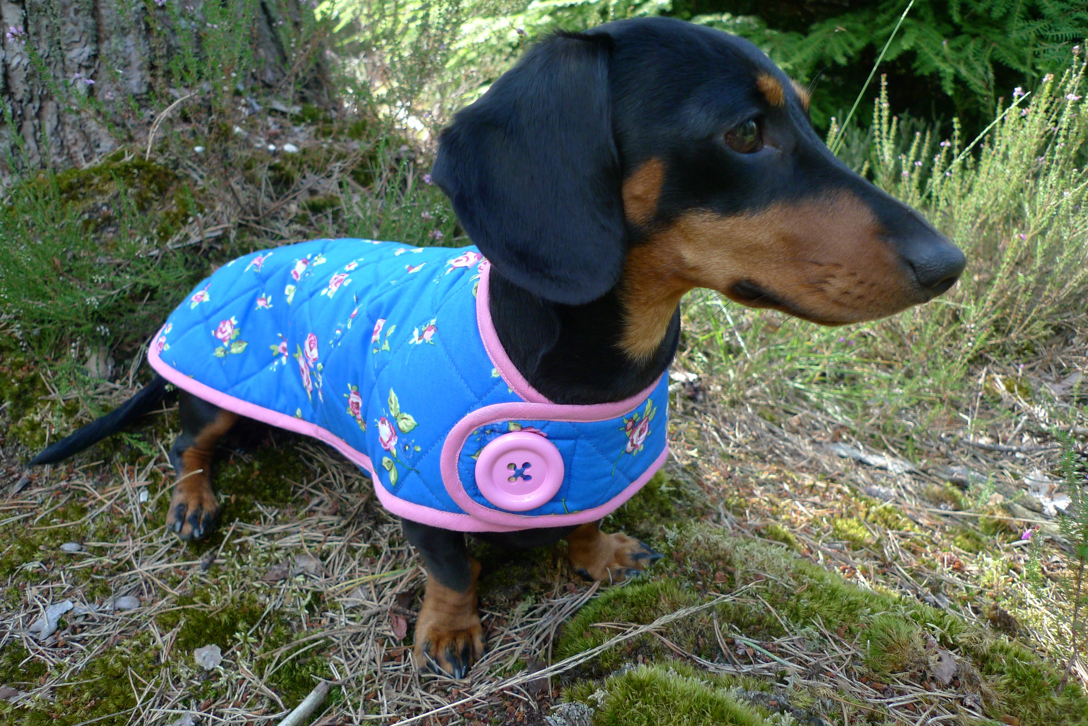 The Sidmouth Dachshund Coat Perfect For The Vintage Style English