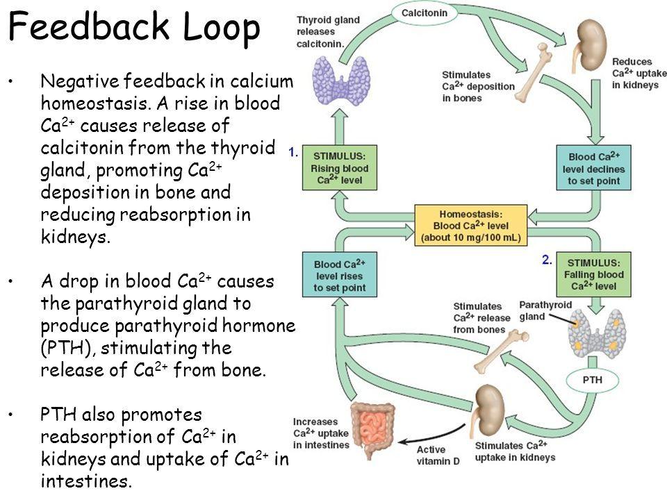 Feedback Loop Jpg 960 720 Pixels Feedback Loop Stimulation
