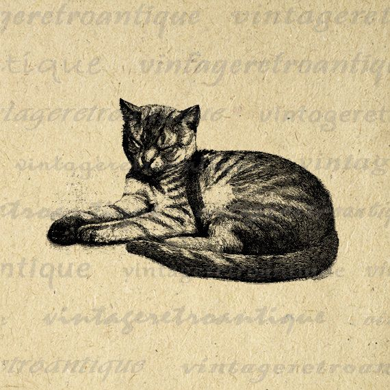 Printable Digital Cat Graphic Housecat Image Illustration Download Vintage Clip Art. High resolution digital graphic from antique artwork for printing, fabric transfers, and much more. For personal or commercial use. This digital graphic is high quality, high resolution at 8½ x 11 inches. A Transparent background png version is included.