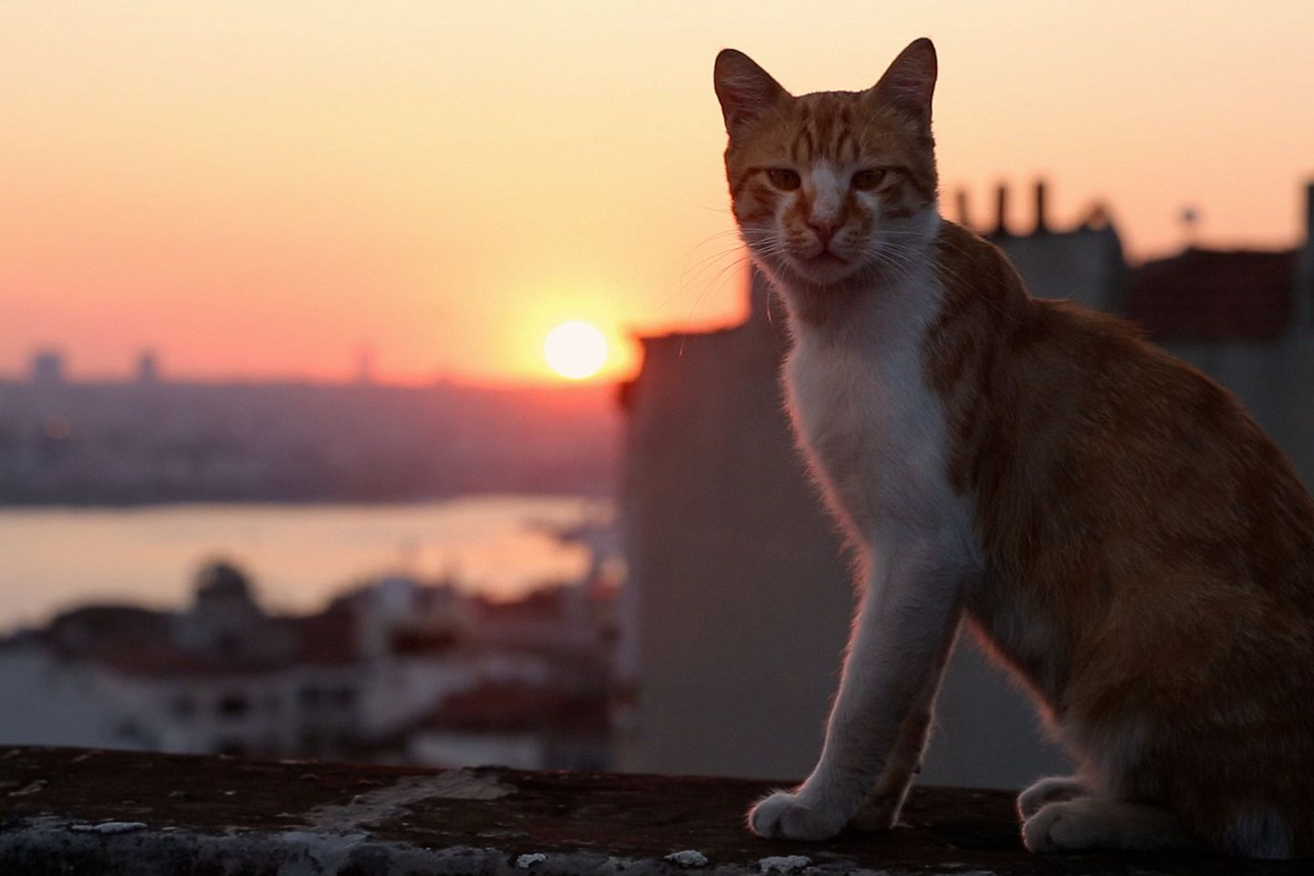 Kedi is the cat documentary of dreams Cats, Funny animal