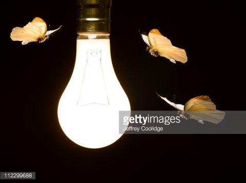 Moths around Light Bulb