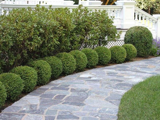 Boxwood edging boxwood globes johnsen landscapes pools for Garden design ideas with hedges