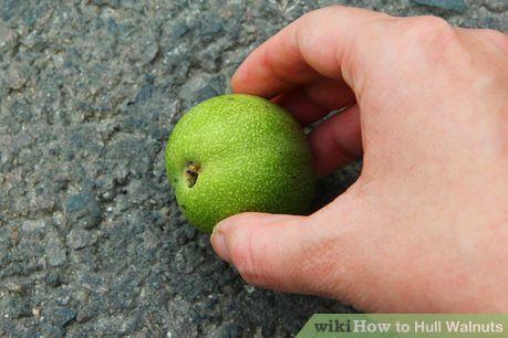 Image titled Hull Walnuts Step 1