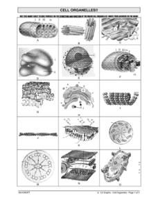 Cell Organelles Worksheet | Teaching cells, Science cells ...