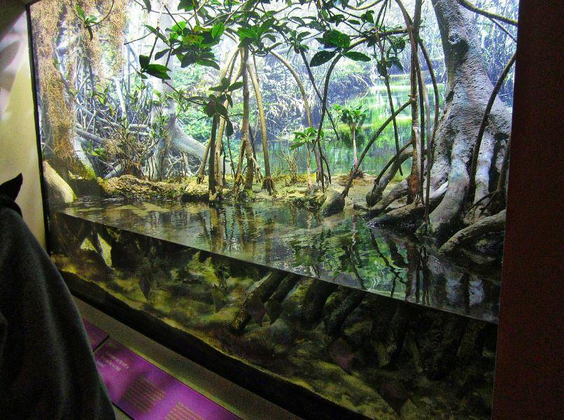 Mangrove Oceanarium Aquarium Mangrove Forest Biotope