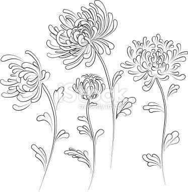 Chrysanthemum Royalty Free Stock Vector Art Illustration