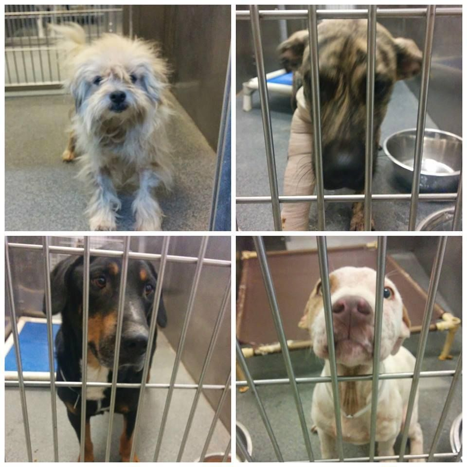 72414 Dallas Animal Services and Adoption Center is