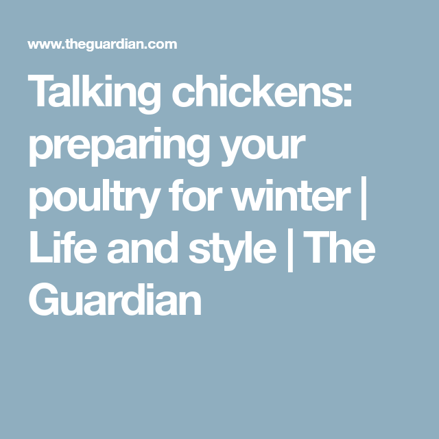 Talking Chickens: Preparing Your Poultry For Winter