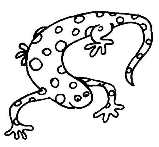 Lizard Butterfly Coloring Page Animal Coloring Pages Coloring Pages