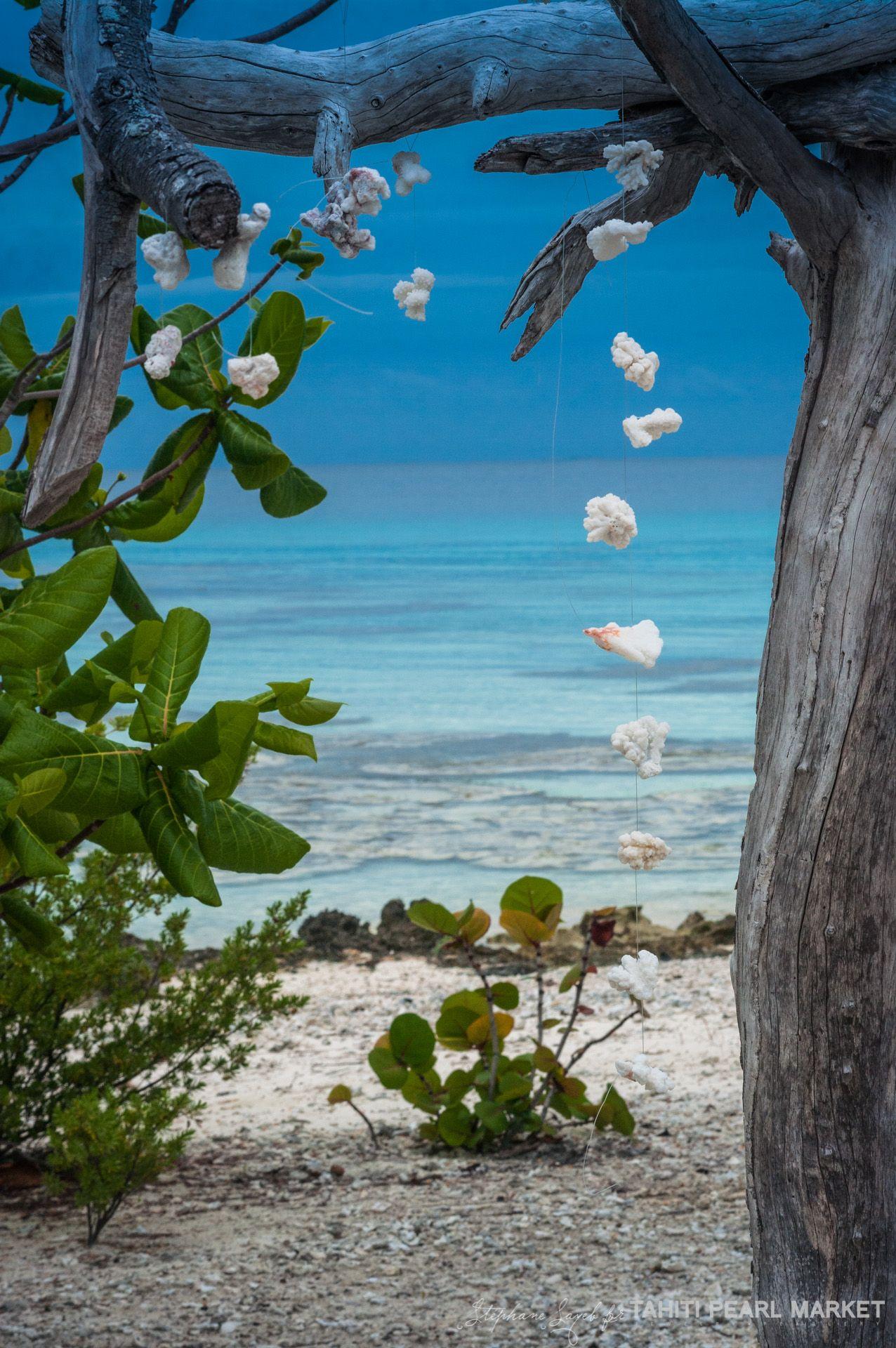 Jardins Des Tuamotu Pearl Farm Tahiti Tropical Islands