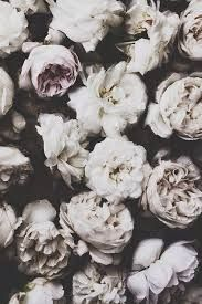 Image Result For Butterfly Black And White Background Tumblr Flowers Floral Pretty Flowers