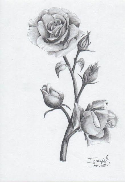 So Rosas Para Tatuagens Feminina Tatuagens De Rosas Azuis