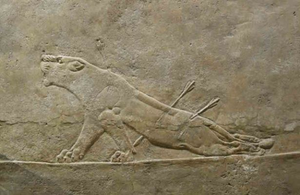 Art Images for College Teaching: Lion Hunt of Ashurbanipal ... |Wounded Lioness Mesopotamia Ancient Art