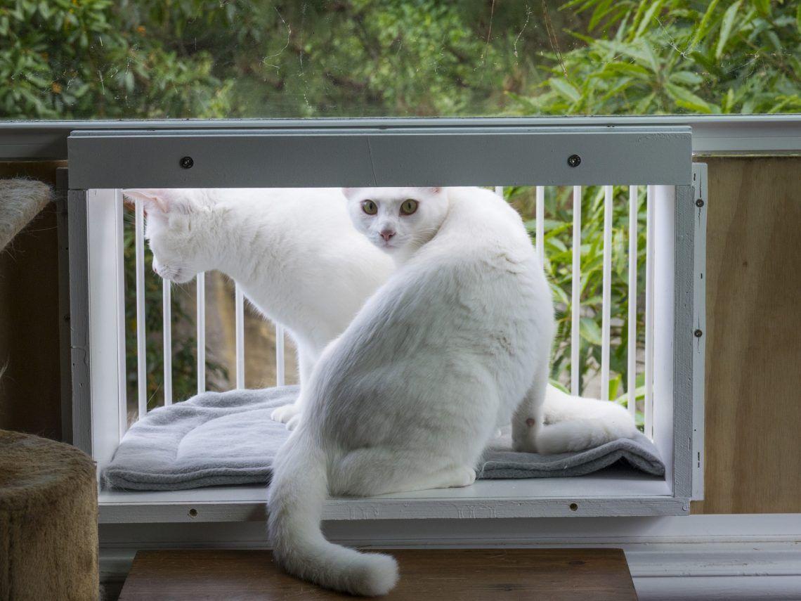 Cat window box diy stepbystep instructions detailed