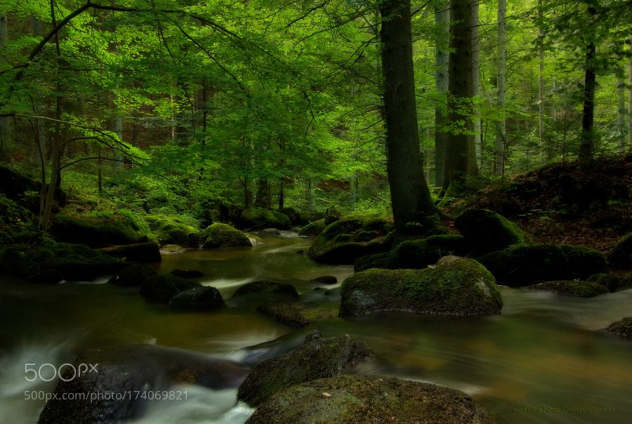 Im Dunkel des Waldes by ClausJanker via http://ift.tt/2dfZE45