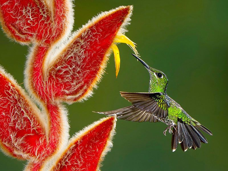 Tap into your creative side with some of the best nature photography to date.