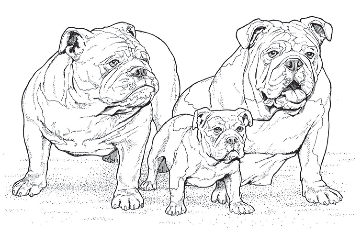 8 best dog coloring pages for adults images on pinterest adult coloring coloring books and art print