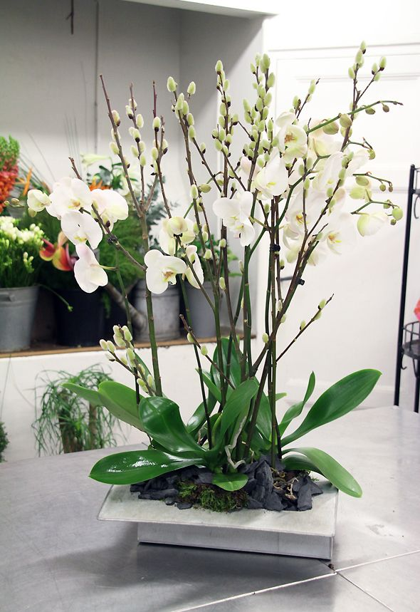 Superbe Composition D Orchidees Blanches Atelier Floral