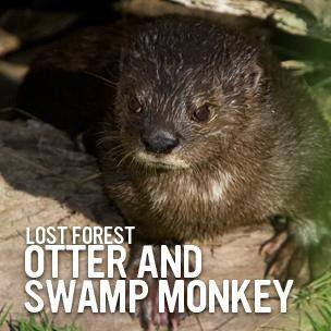 Otters and Monkeys: Frolic in the forest San Diego, CA #Kids #Events