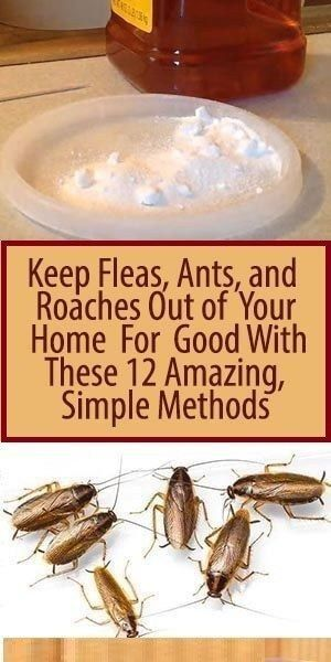 Keep Fleas Ants And Roaches Out Of Your Home For Good With These 12 Amazing Simple Methods Cleaning Hacks Cleaning Household House Cleaning Tips