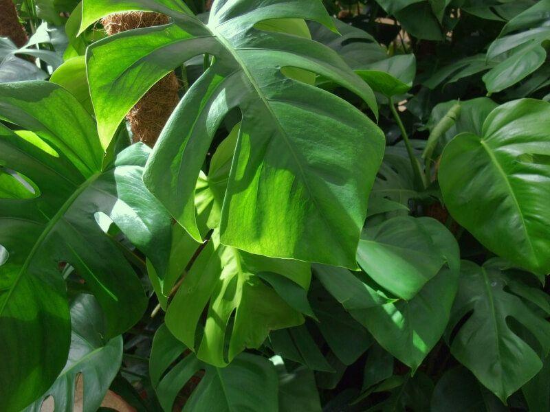 Pflanzen fürs Bad gesucht? Die 12 besten Badpflanzen! Bathroom - pflanzen für badezimmer
