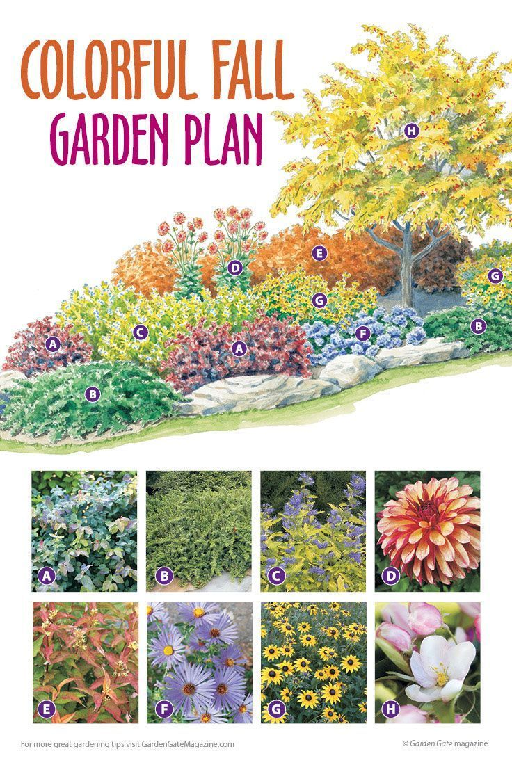 Colorful Fall Island Bed In 2020 Flower Garden Plans Garden Planning Perennial Garden Plans