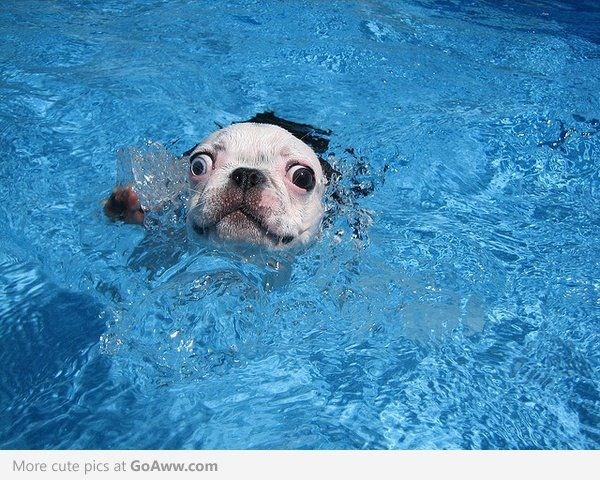 Mayday! We are sinking!