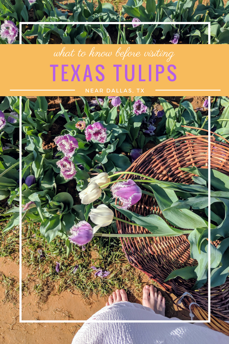Texas Tulips What Youll Find At This Stunning Tulip Farm In Pilot