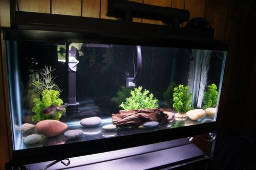 Gravel Sand Substrate Or Bare Bottom Tank Coral Fish Tank Fish Tank Design Goldfish Tank