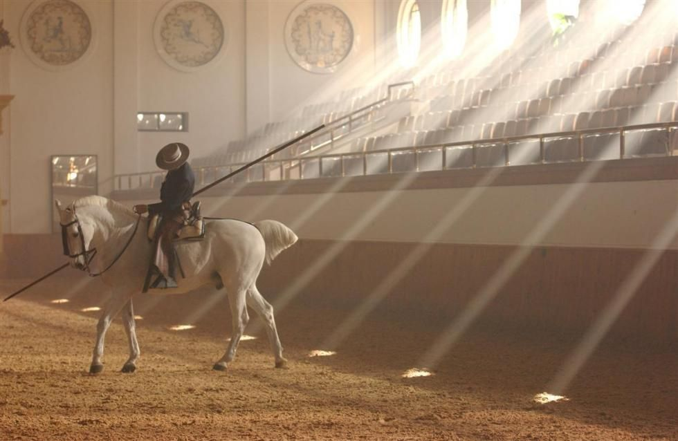 Pin En Horses