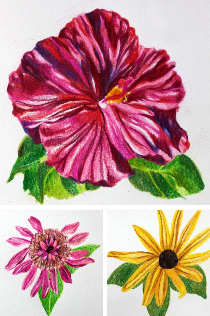 Whether they are in your home or on a Pinterest board, flowers brighten our lives. It's only natural that you'd want to translate that beauty on to paper, and colored pencils are a fantastic way to do so because of their vibrant hues. Follow along this five-step tutorial to draw your own blooming botanical illustration.