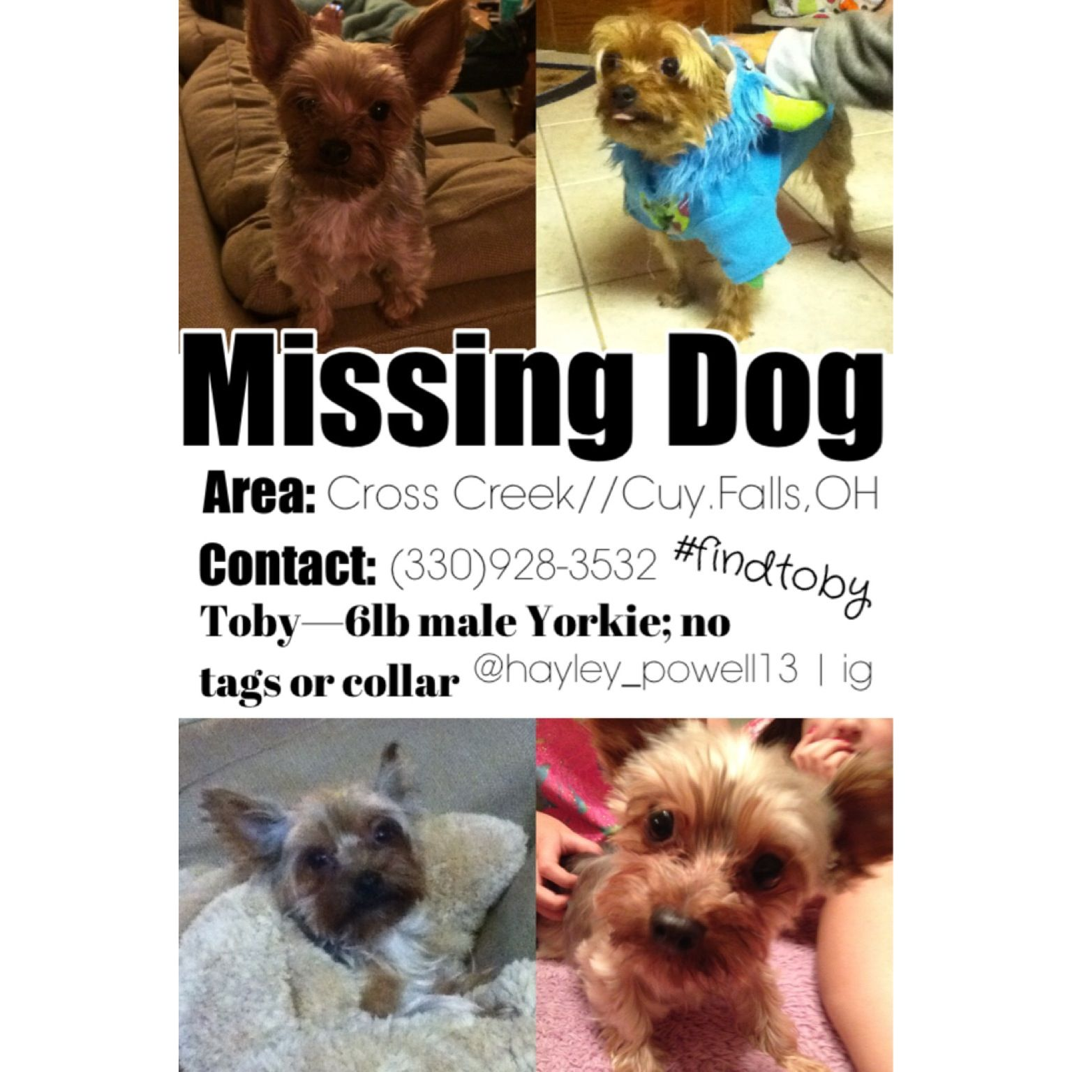 Guys. My dog, Toby, has been missing sinse 2/15/14. He is a 6 pound Yorkie and is probably in Cross Creek Cuyahoga Falls Ohio. If you see him please contact me at 330.928.3532 Please repost