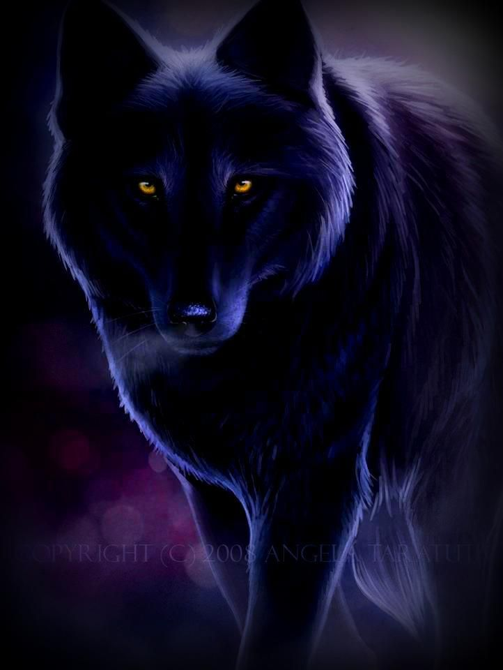 Male black wolf with yellow eyes - photo#35