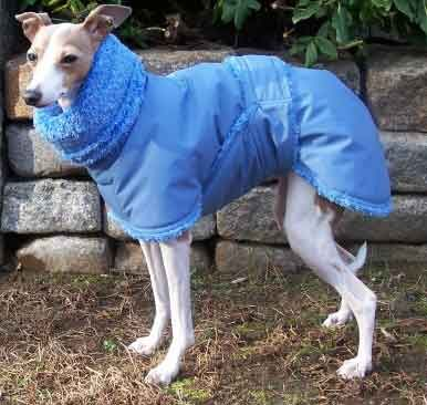 Blue Willow Dog Coat paige italian greyhound - blue gortex + fleece ...