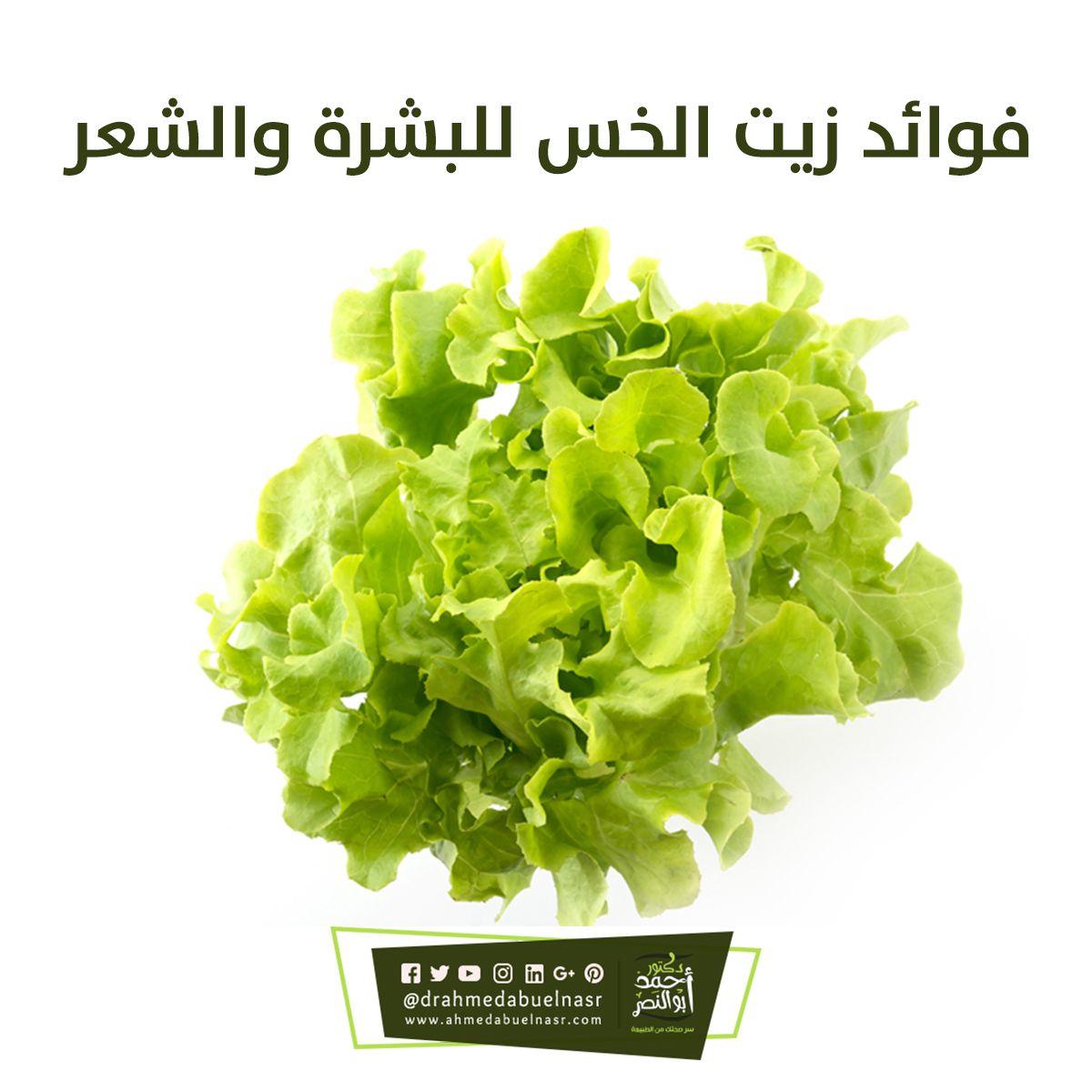 فوائد زيت الخس للبشرة والشعر Herbs Lettuce Vegetables