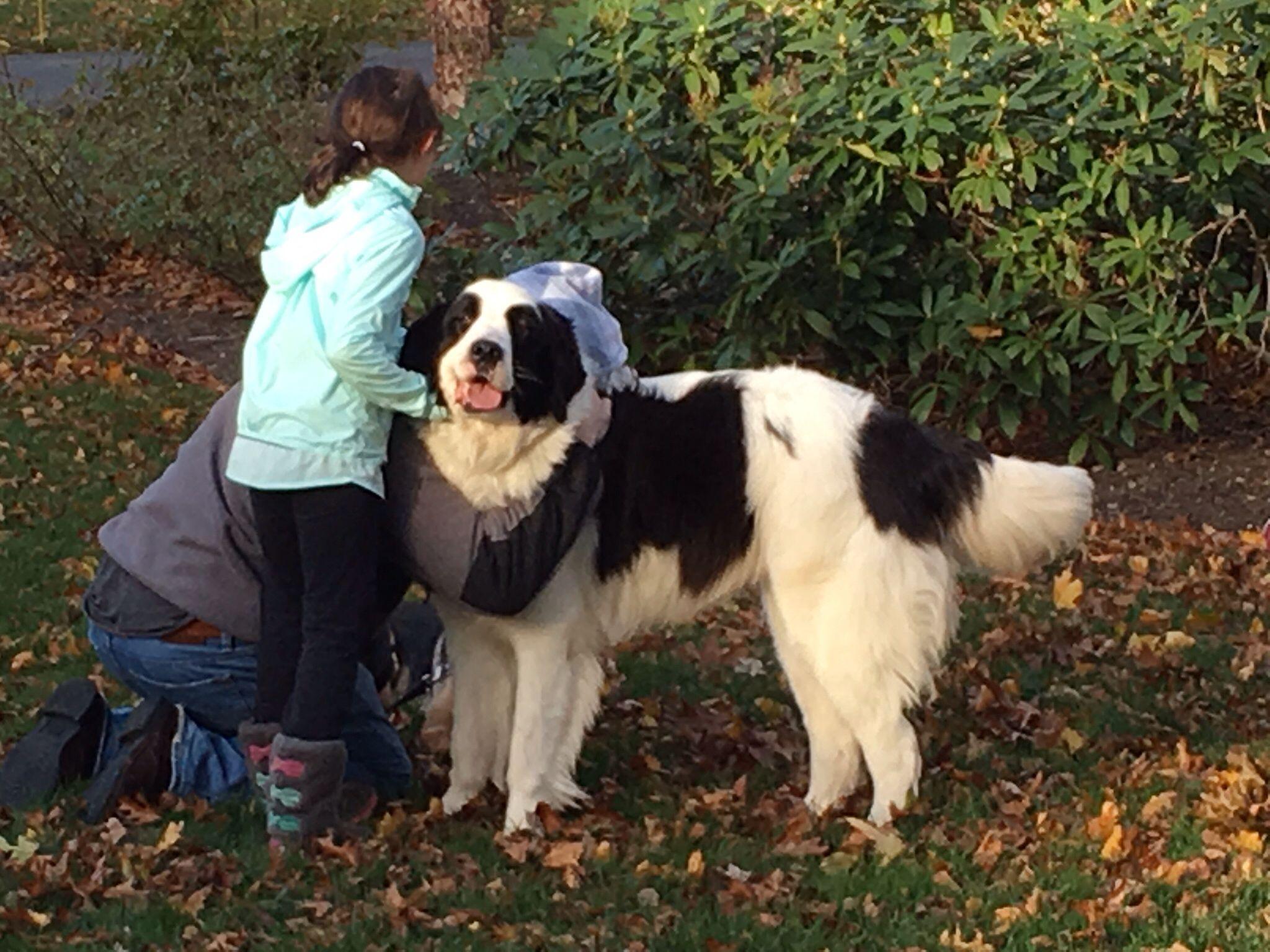 I hugs dogs animals hug
