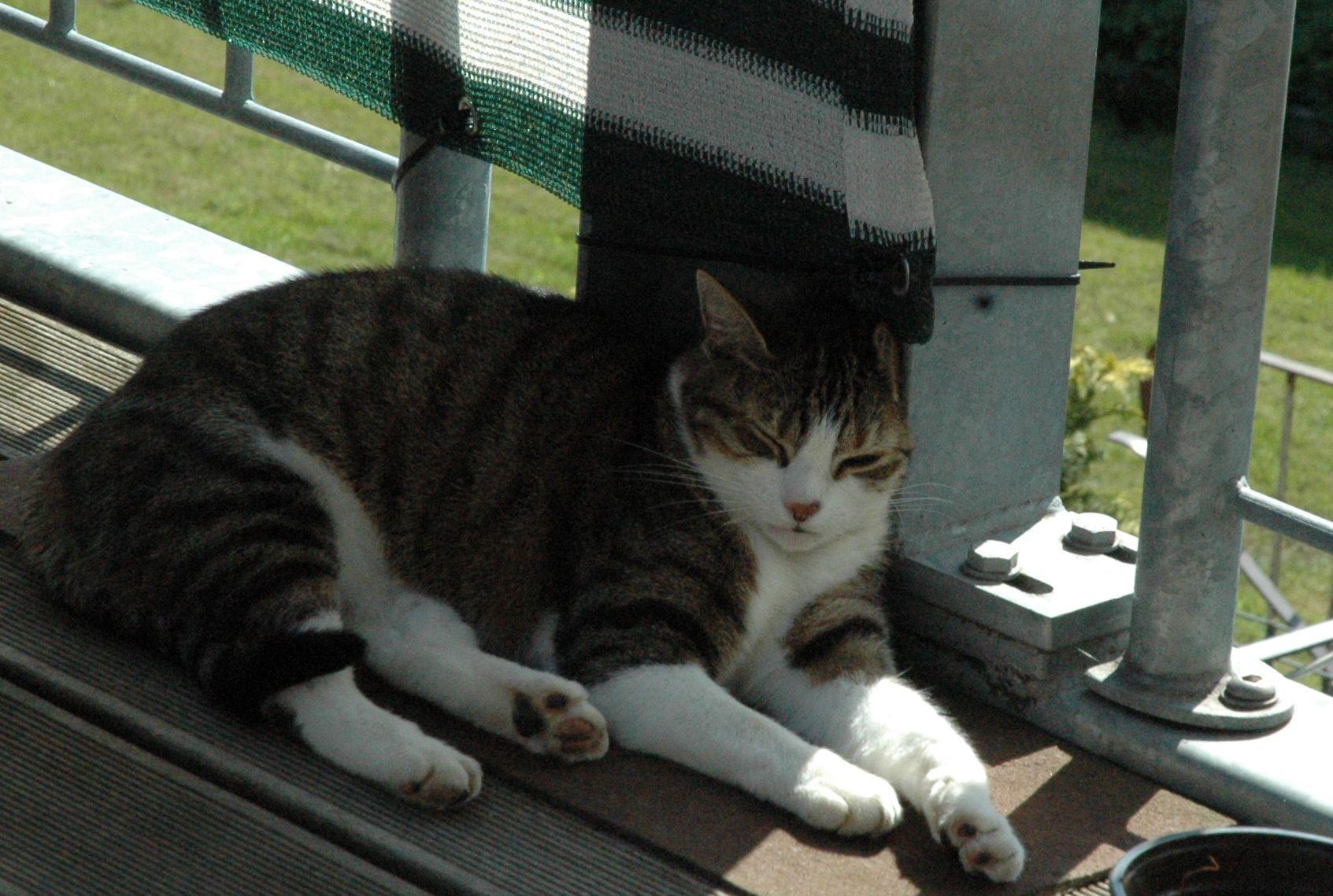 Unsere Katze nach einer ayurvedischen Kopfmassage... www.massage-kaarst.de