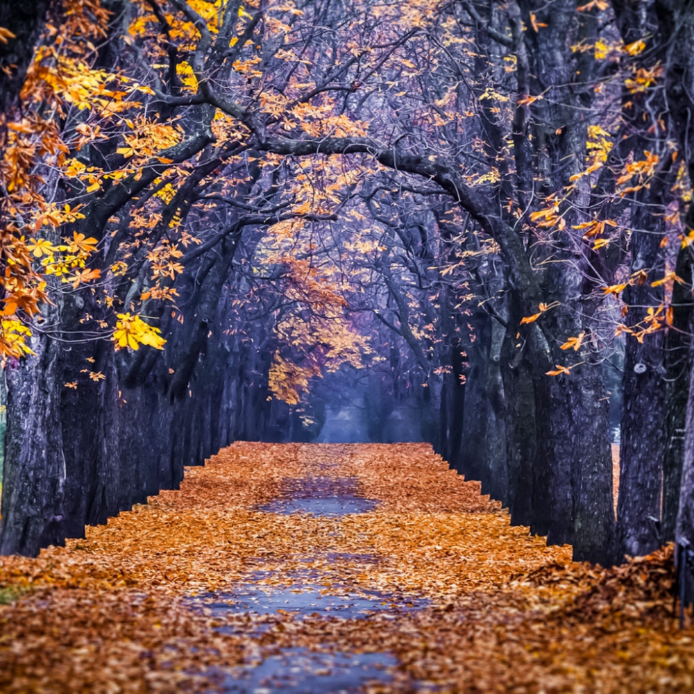 Обои forest, autumn, leaves, tree. Природа