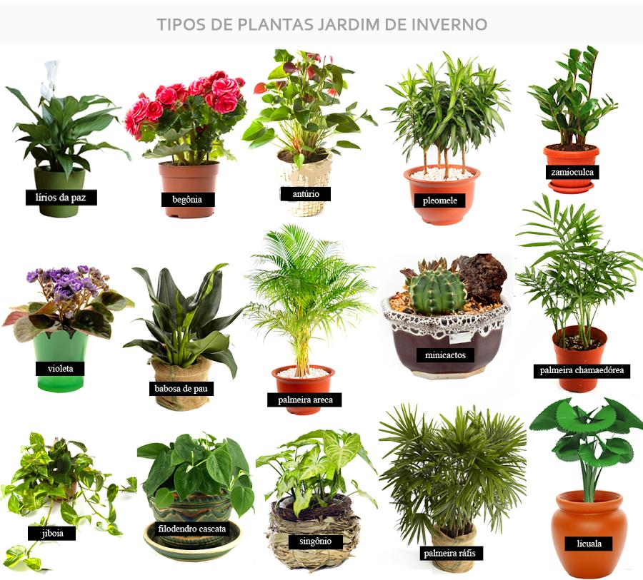 Jardim de inverno na sala como fazer passo a passo for Plantas baratas