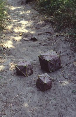Andy Goldsworthy, Sycamore Boxes, 1984.