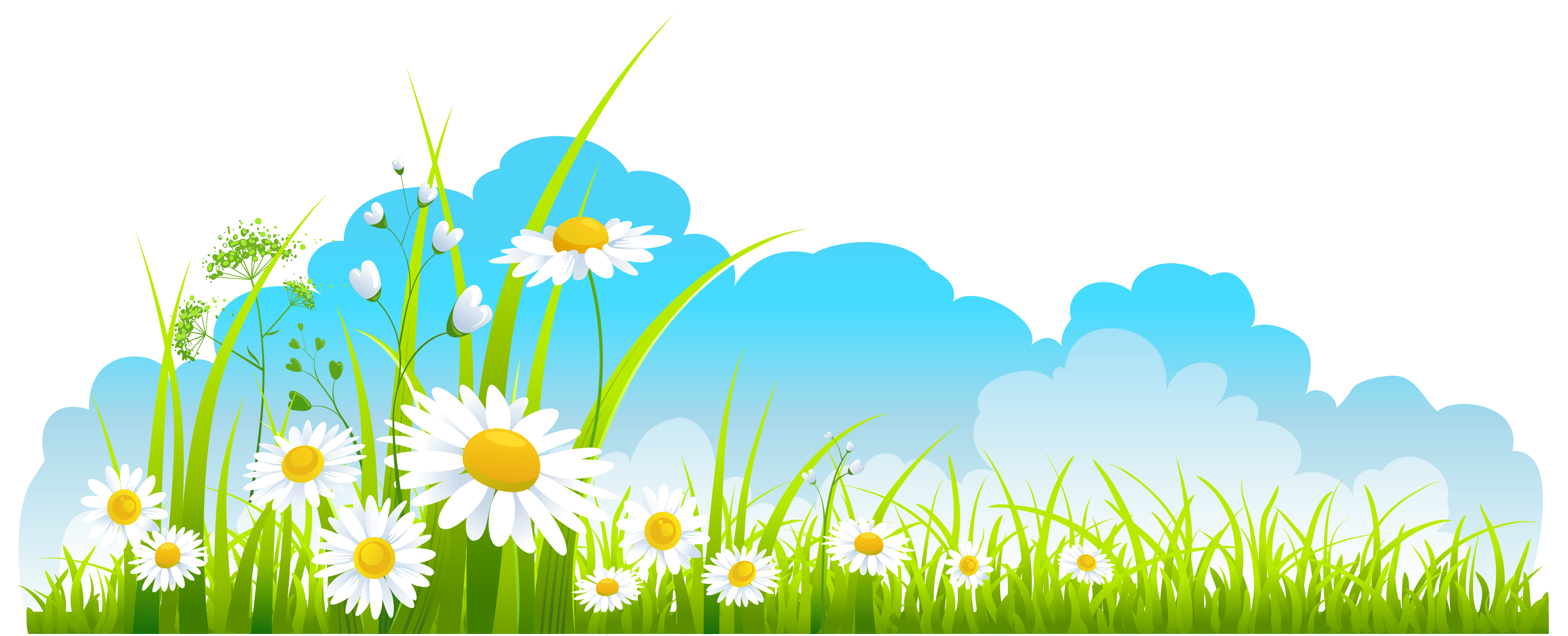 Spring Decor Sky Grass And Camomile Png Clipart Clipart Best Clip Art Floral Drawing Flower Wallpaper
