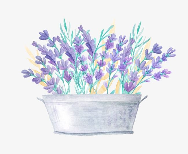 Beautiful Lavender Lavender Purple Flower Png Transparent Clipart Image And Psd File For Free Download Flower Png Images Free Watercolor Flowers Watercolor Flowers