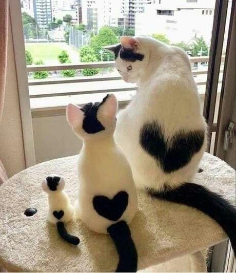 Herzige Familie Susse Tiere Susse Katzen Bilder Baby Katzen