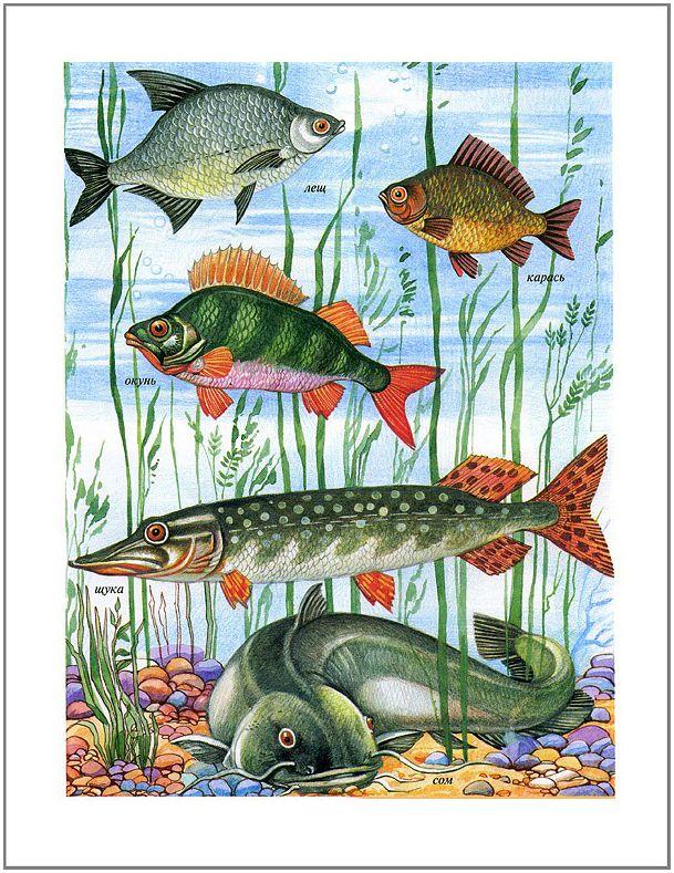 картинки только пресноводных рыб позаботился быстром