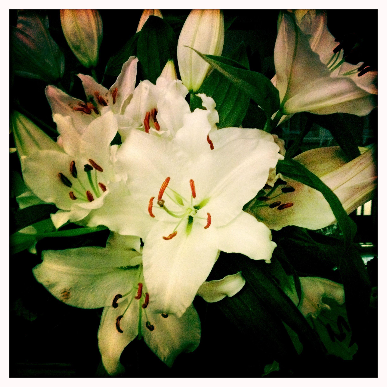 Lilies of capricorn — img 15